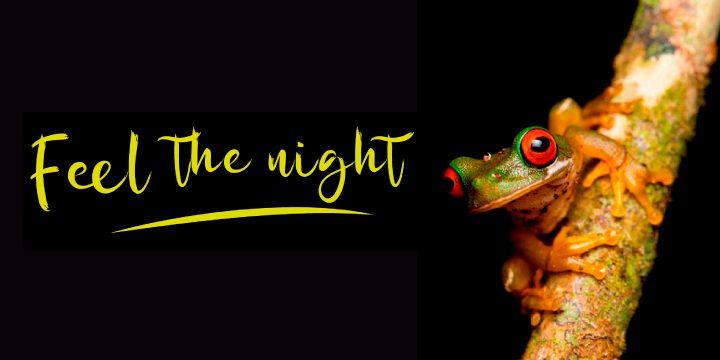 PRIVATE NIGHT TOUR